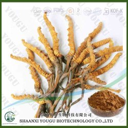 Herbal Medicine Extract Manufacturer Supply Polysaccharide Cordyceps Sinensis for Anti Cancer Extract