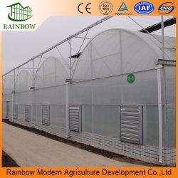 Traforo della Multi-Portata/tipo professionali serra di plastica dell'arco della pellicola di PE/Po per la crescita idroponica della fragola cetriolo/del pomodoro