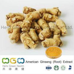 Extrait de plante naturelle Le ginseng américain (racine) extrait de plante herbacée des résidus de pesticides à base de plantes faible