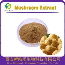 버섯 폴리사당류 시리즈 유기농 에르니움 에르니쿠스 버섯 추출 30% 폴리사당류 버섯