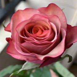 Mazzo fresco prossimo della Rosa di disposizioni floreali del fiore di Cust del regalo di promozione nuovo