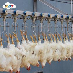 Abattoir automatique de poulet de 200 bph à 100 bph Halal Poultry