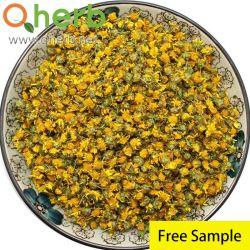 Linarin wilder Chrysanthemun Blumen-Auszug