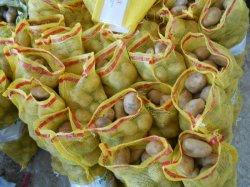 2015récolte de pommes de terre fraîches de Hollande (80-150g)