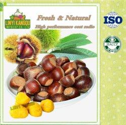 Venda por grosso de frutos frescos Raw Fácil Descasque as castanhas assadas doces snacks orgânicos