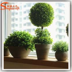 Sfera dell'interno dell'erba verde degli alberi della pianta dei bonsai
