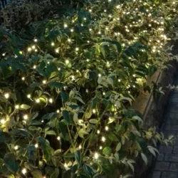 Voyants LED Jardin Décoration de fenêtre Ensembles de décoration de Noël
