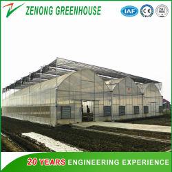 Multi Tunnel po/film PE pour les légumes de serre/reproduction de semences/fleurs/Fruits/tourisme/restaurant Eco