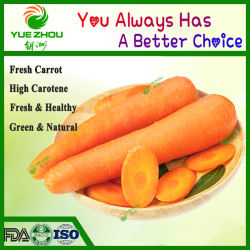 El chino de zanahoria rojos frescos con alta calidad y mejor precio