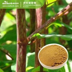 Haut Anti-Bacteria naturel extrait de Trans resvératrol Polygonum cuspidatum