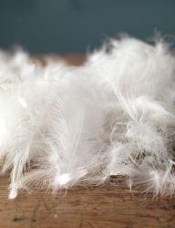 2-4cm 백색 거위는 베개 충전재를 위해 아래로 깃털을 단다
