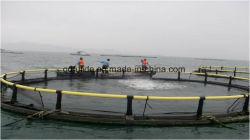 Abertura de águas profundas de peixes da aquicultura gaiola líquido