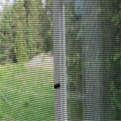 Пыли оцинкованной стальной проволоки экрана /алюминия от насекомых для защиты стекла сетка