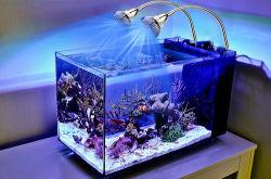 Energie - kweken besparings Waterdichte leiden de Lichte LEIDENE van de Staaf Lamp van het Aquarium voor de Tank van de Vissen van het Koraalrif Marinel