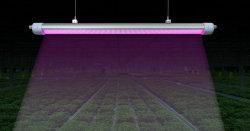 Wasserdichte 50With 150With 200W wachsen helles Gewächshaus LED wachsen Lichter für Pflanzendas wachsen