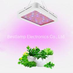 Green House Haute lumière 300W-2000W croître l'usine de lumière à LED