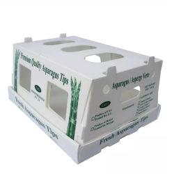 Imprimé en plastique creux Twinwall OEM Cas d'asperges
