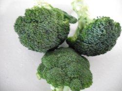 Hebei 2020 possiede il broccolo di verde di alta qualità dello scantinato