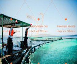 PE Knotless Fish Net para el cultivo de la jaula Preparada de la agricultura de la acuicultura de la bolsa de malla