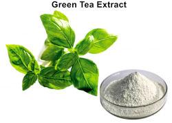 自然な白EGCGの粉の緑茶のエキス
