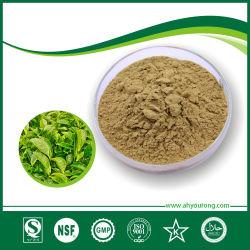 Tè verde Extract& Polifenolo 20-98%, EGCG 15%-98%