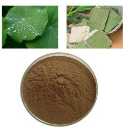 Poudre de feuille de lotus extrait 98 % Nuciferine HPLC/CAS No : 475-83-2 avec une haute qualité