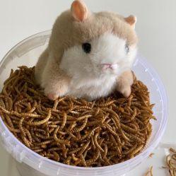 مصنّعة مباشرة جمليّة [هاي قوليتي] بروتين عصفور قطة فريزين المجففة Mealworm طعام الحيوانات الأليفة