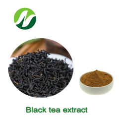 أفضل جودة Pure شاي مستخرج فوري Camellia Sinensis شاي أسود استخراج