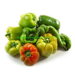 Poivrons frais piment vert