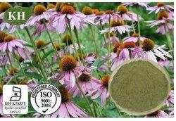 Estratto del Echinacea; Echinacea Purpurea; CAS no.: 90028-20-9