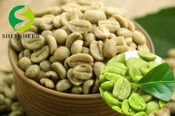 Venda por grosso de feijão verde de alta qualidade Sheerherb café com grãos Arábica Melhor Preço para importação de grãos de café cru de boa qualidade