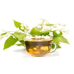 Tè di erbe di salute del tè organico naturale del gelsomino