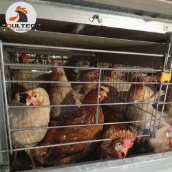 Il tipo gabbia & pollame del Namibia H di strato della batteria mette in gabbia con la macchina dell'accumulazione dell'uovo nell'azienda agricola di pollo da vendere
