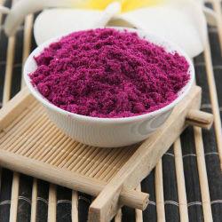 Gel de haute qualité de la poudre de fruits séchés Pitaya rouge