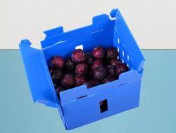 PP plegado corrugado plástico paquete cajas de plástico de almacenamiento de frutas