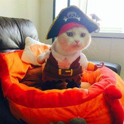 Fato de Roupa Funty para roupa de mascote para o gato Boné Dog Plus com padrão Pirate