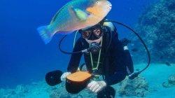 На прошлой неделе в водной среде морского подводного скутера мотора скутера подводного плавания