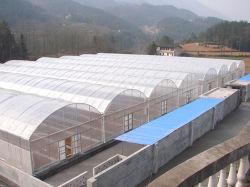 Arco Multi-Span techo tipo PE/Po Plástico invernadero agrícola con cultivos hidropónicos Sistema para el tomate pepino/// la plantación de pimiento lechuga