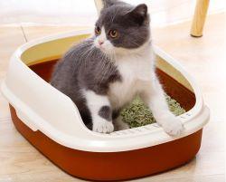 Boîte en plastique de la litière pour chat bac à litière pour chat chat toilettes avec écope