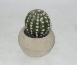 Cactus artificiel réaliste dans le ciment semoir pour décoration intérieure