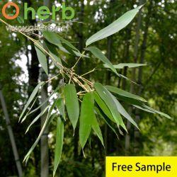Extracto de virutas de bambú Extracto de la hoja de bambú