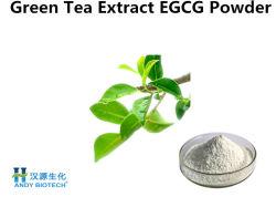 Estratto del tè verde di 95% EGCG con polvere bianca