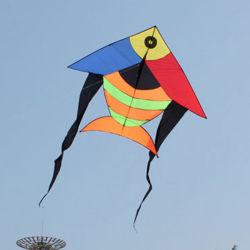 El pez volador de cometas de alta calidad
