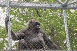 Гибкий Pongidae шимпанзеа обезьяны обезьяны сетки веревочки нержавеющей стали/приложение примата/животных