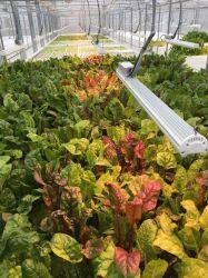 Il fornitore di iso IL LED 2020 si sviluppa chiaro per la serra