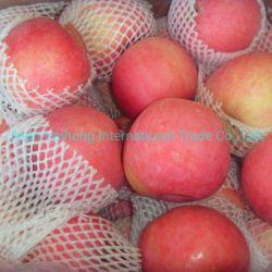 Exportés à l'Europe fruits délicieux Apple Apple Red FUJI