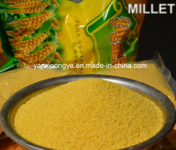Alimentar el estómago muy glutinoso nutrición casco amarillo mijo