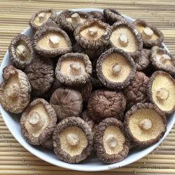 Lisse les champignons shiitake séchés séché tout paquet en vrac