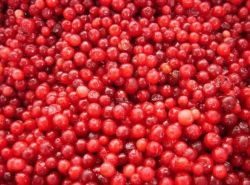 凍結するLingonberryは等級を培った
