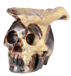 Natuurlijke Schedel Septarian/Turtle die Steen Gesneden Druse #8n27, het Helen van het Kristal snijden